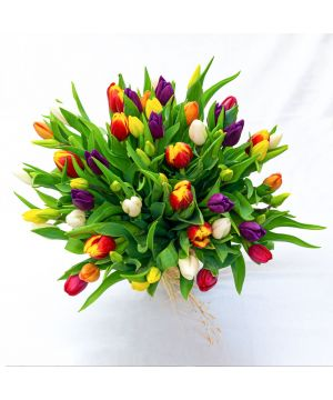 Tulipány pro radost